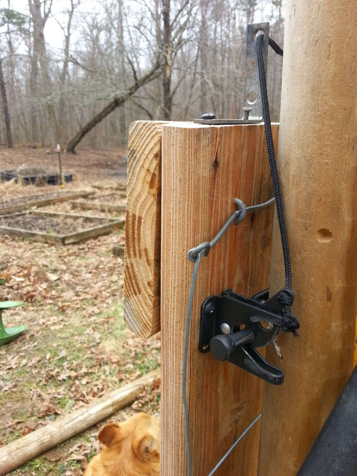 A Garden Gate Latch May Not Be As Exciting As A Bear Sighting, But For Mom  And I, Rigging Up The Latch Was A Great Accomplishment, And Deserves To Be  ...