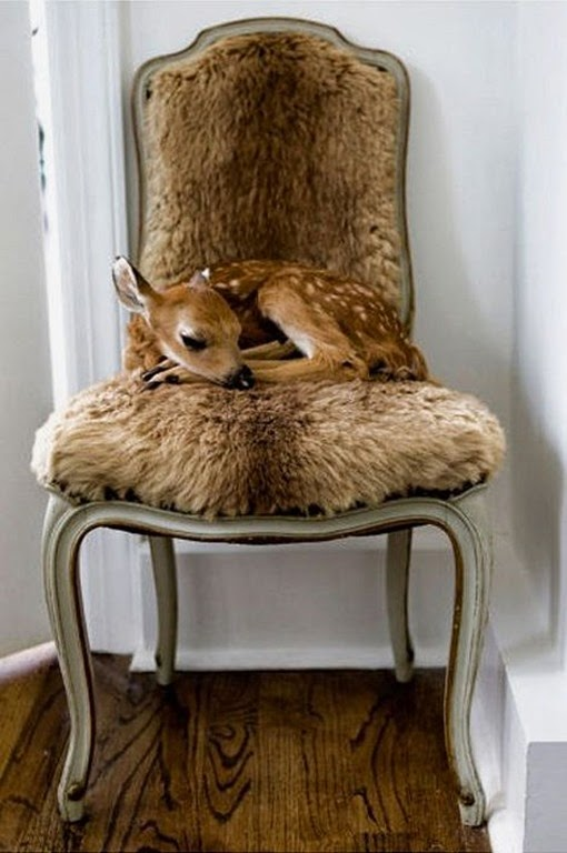 deer chair
