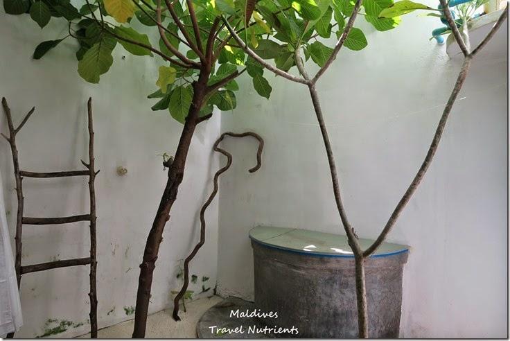 馬爾地夫居民島Mahibadhoo- Amazing Guesthouse (22)