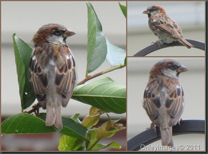 swallow collage0825