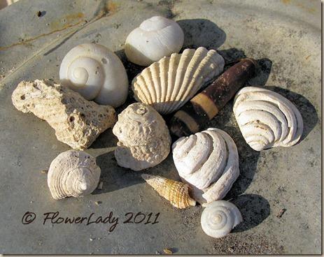 06-20-shells