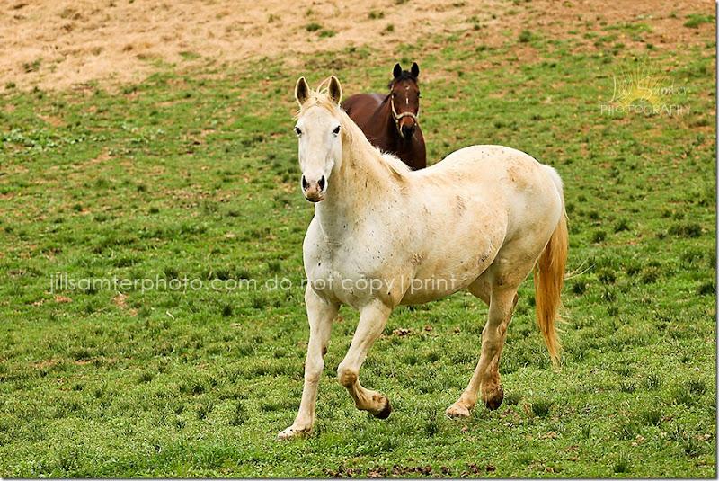 horses-5496