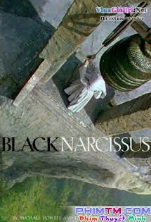 Thuỷ Tiên Đen - Black Narcissus