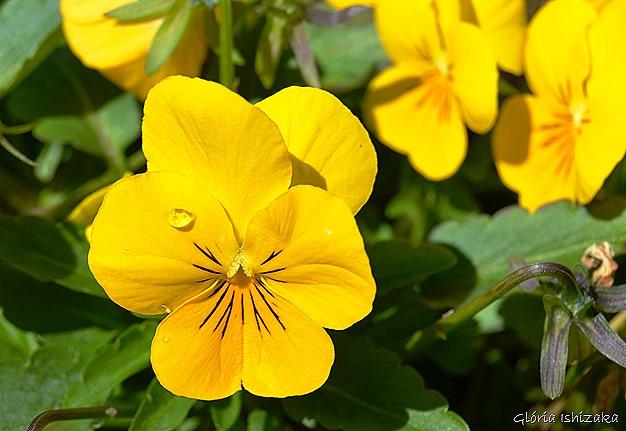 Glória Ishizaka - Flor amarela 35