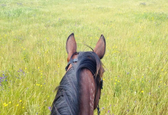 Pony ears and wild flowers - A Riding Habit