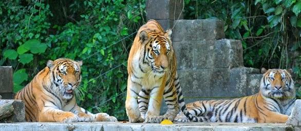 5. Tiger Valley