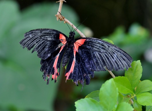 2013-07-05 butterfly pavilion (21)