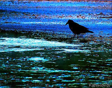 6. Dark raven-kab