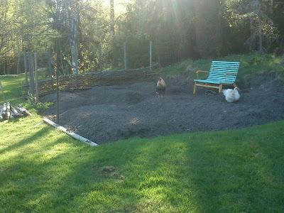 Flätat staket, fläta staket, inhägnad, köksträdgård, hönssäkrat, odla egen mat, hållbart, självhushåll