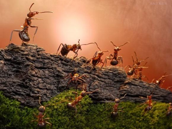 Life-of-Ants-Andrey-Pavlov-24