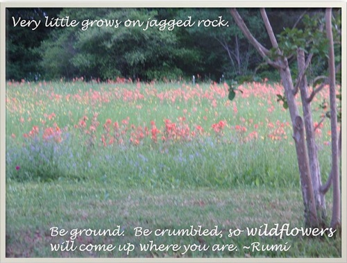Rumi 2_wildflowers JPEG