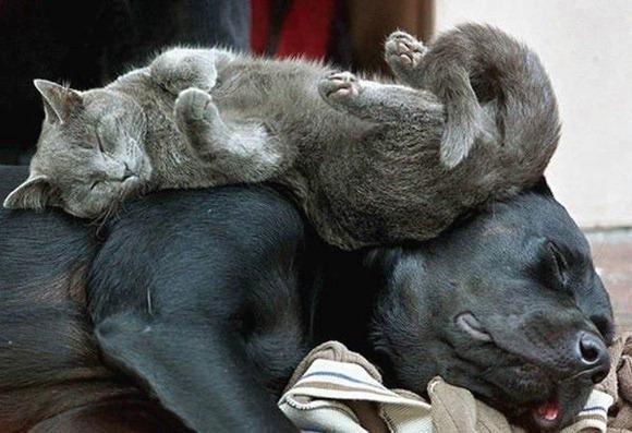 Cats Will Sleep Anywhere 05