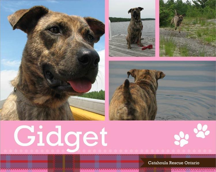 gidget collage