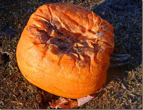 Pumpkin Jack 1-13-13 1