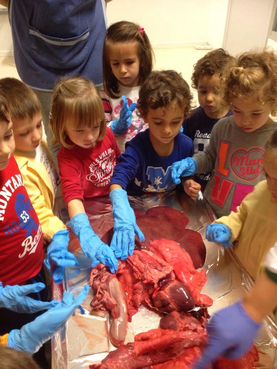 BLOGS ACTIVIDADES EDUCATIVAS : Infantil tres años órganos internos