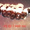 livinusbos_groepsfoto - 1week.jpg