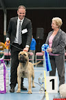 20130511-BMCN-Bullmastiff-Championship-Clubmatch-2483.jpg