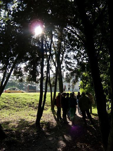 Bosque de urapanes en el Humedal Cordoba