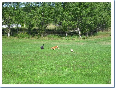 20110823_dogs-field_004
