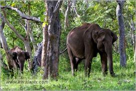 _P6A1694_wild_elephants_mudumalai_bandipur_sanctuary
