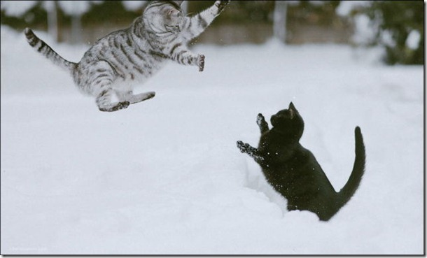 cats-play-snow-23