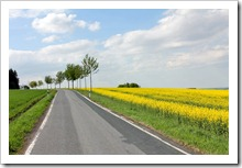 120508_road rape-field