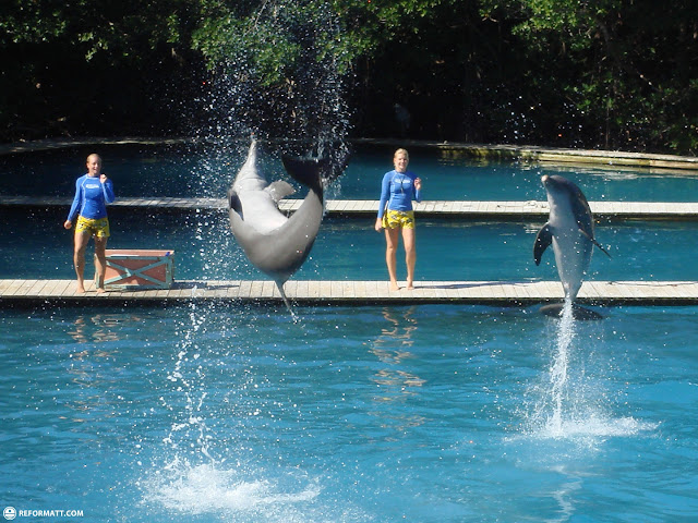 the flipper show in Miami, Florida, United States