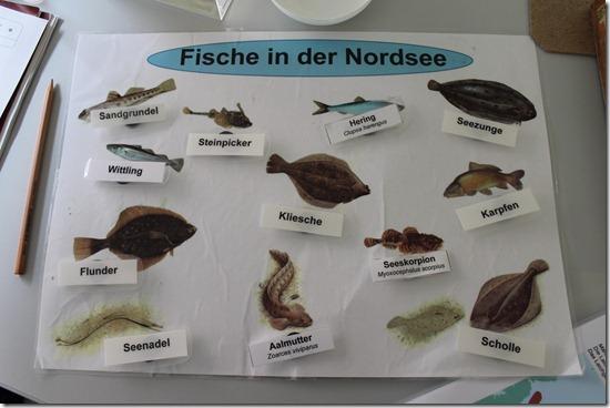 Nordseefische