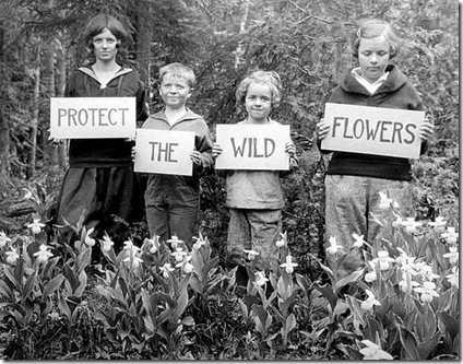 protectthewildflowers