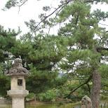 in Nara, Osaka, Japan
