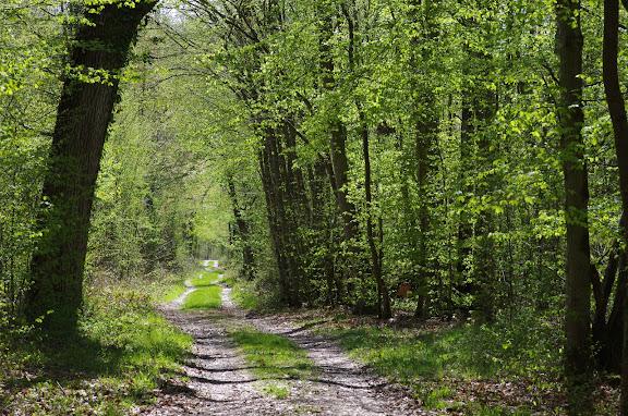 L'allée forestière, le 21 avril 2012. Les Hautes-Lisières (Rouvres, 28). Photo : J.-M. Gayman