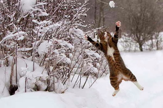 Cat-playing-in-snow_03
