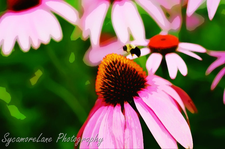 Watercolor coneflowers and bee-w
