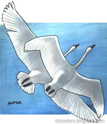 swans_painting