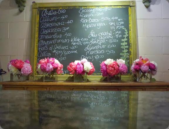 shop 1305966418 anne patersons flowers
