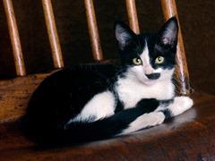 gato_preto_com_manchas_brancas-1280x960