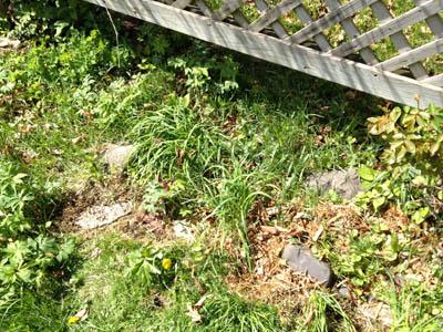 garden 8 Photo Apr 04, 12 20 14 PM.jpg
