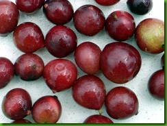 Camu Camu fruits b