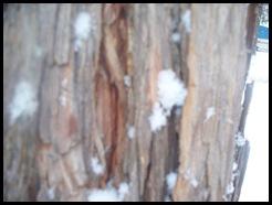 snow, 2012 007
