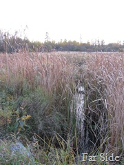 West side of Cripps Creek