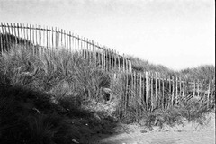 Sand-Dune-Fencing-11