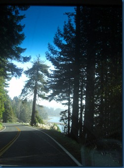 Redwoods (6)