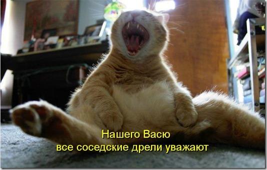 kotomatritsa_lv