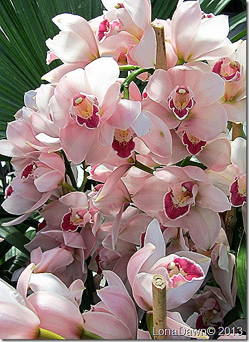 FPC_Orchids_Pinks
