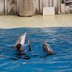 Boudewijn Seapark-041.JPG