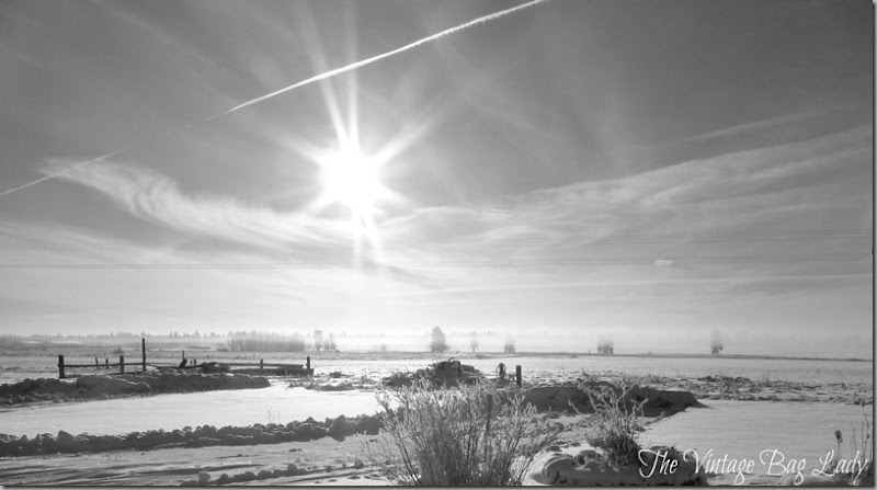 winter sunshine 001 (2)