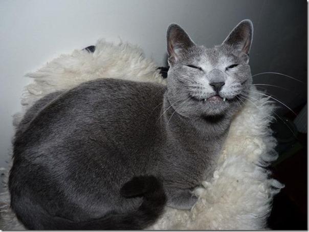 Gatos Felizes (15)