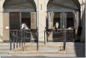 Venice horses_edited-1