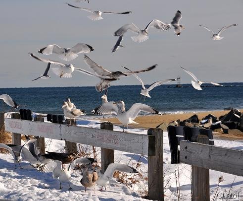 15. sky full of gulls-gusto