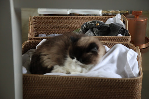 Though most of the time, Vivaldi fights with Bartok over this basket of blankets.  We pets often find something that smells like you to sleep on so we feel comforted until you come back!